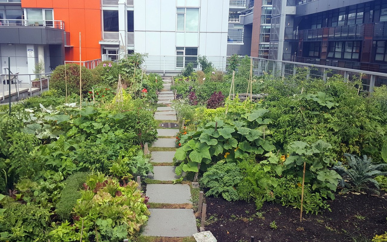 Why grocery retailers are embracing rooftop gardens