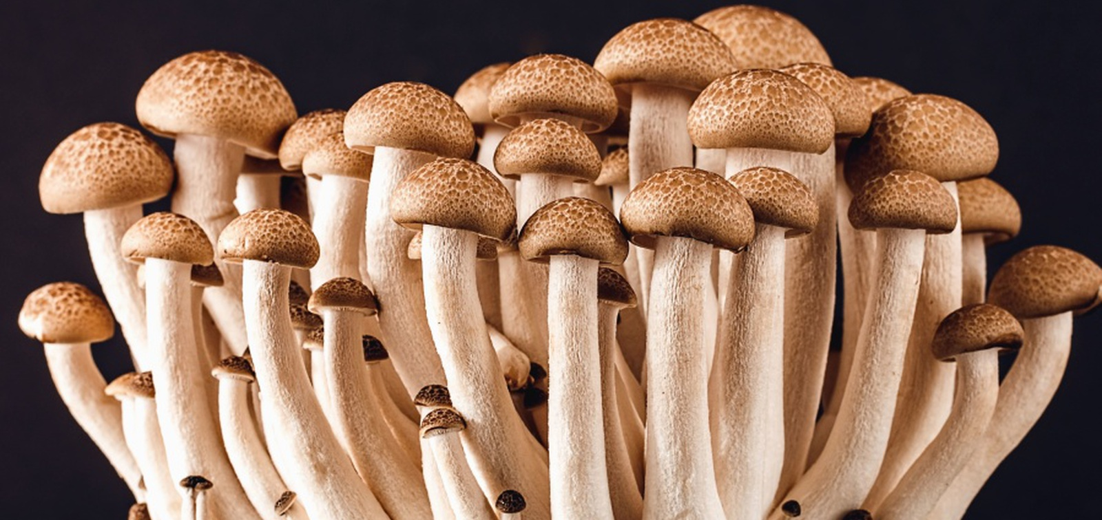 A fungus among us: Food makers cuddle up to the much maligned mushroom